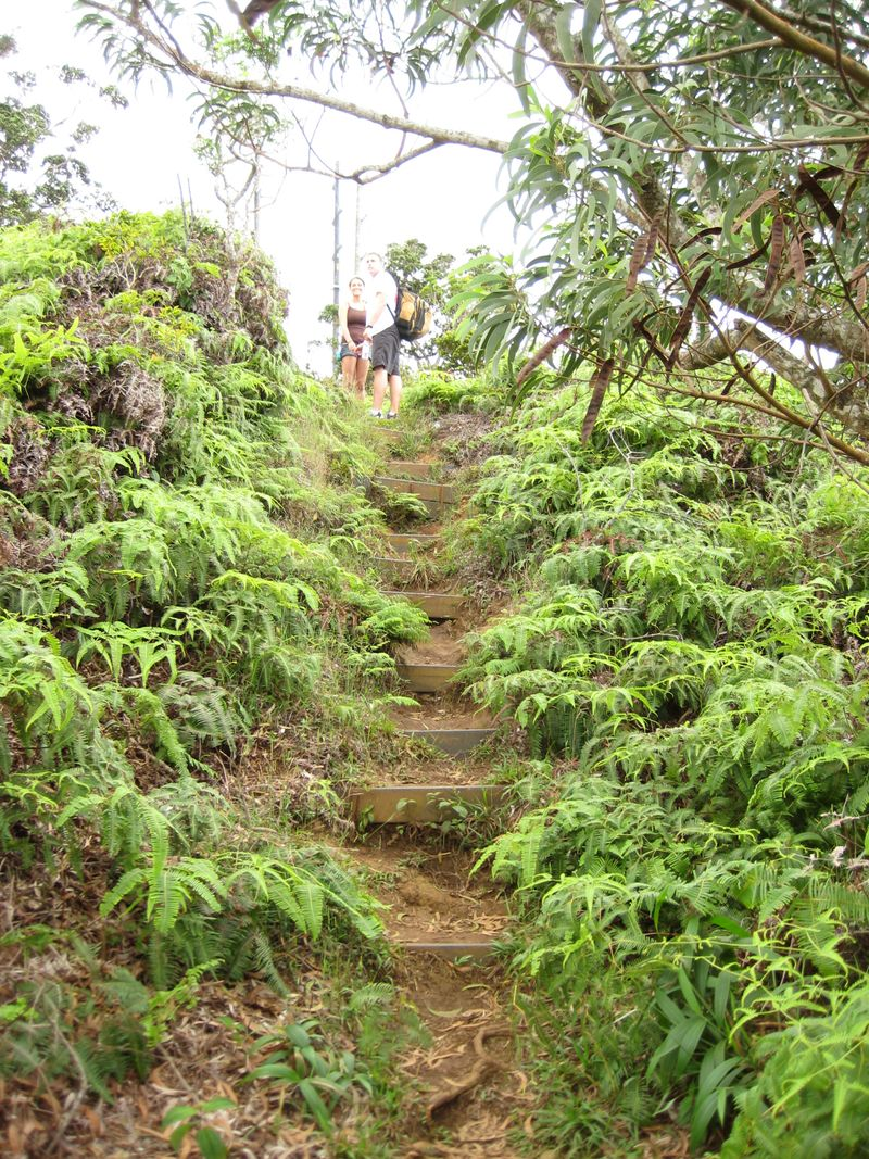 Steps w hikers