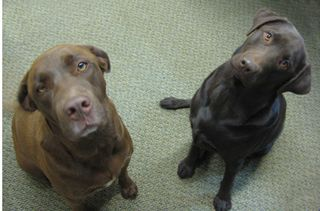 Huey and Chaco