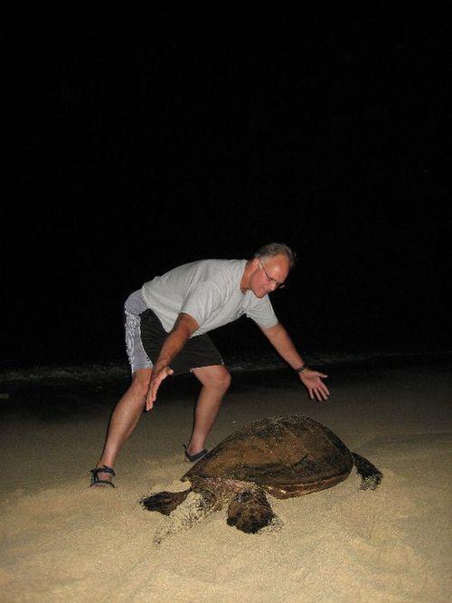 Dan Turtle